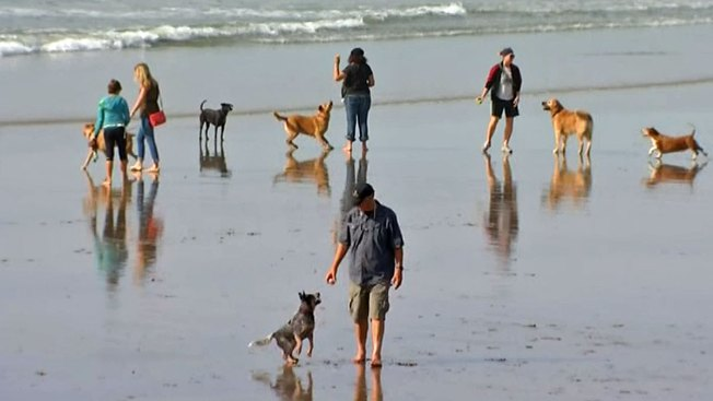 dogs allowed on jersey shore beach during summer nbc 10 philadelphia