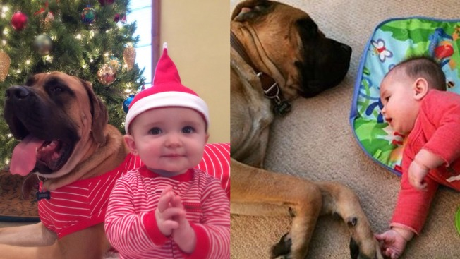 Facebook Users Pitch In to Help Sick Dog Who Saved Baby Girl