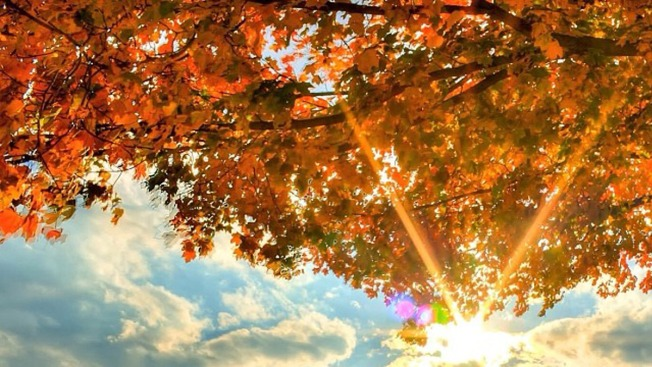 Where's the Fall Foliage in the Philly Area?