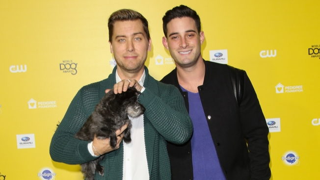 Lance Bass Shares Loss of Dog Lily, Warns Other Pet Owners