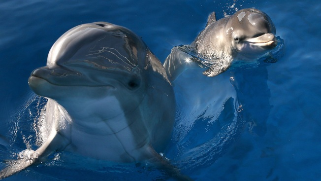 Climate Change, Pollution Delay Move of National Aquarium's Captive Dolphins