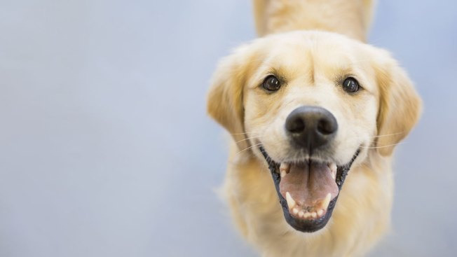 Pennsylvania Wants You To License Your Dog