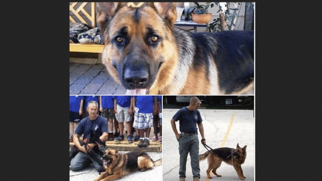 K-9 Cop Dies Suddenly on Independence Day