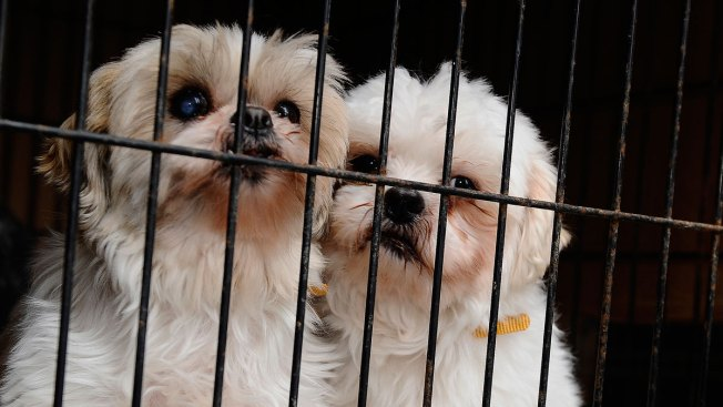 Poor Pups: Report Names Chester County Dog Kennels Among Worst in the Country