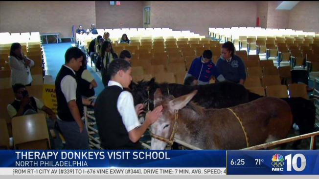 Therapy Donkeys Visit Philadelphia Students With Special Needs Nbc