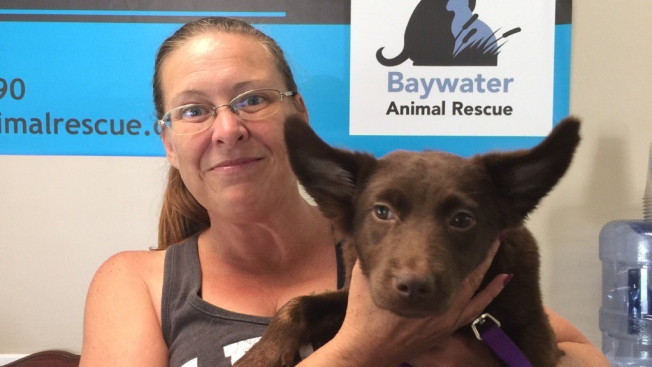 'She Had to Come Home With Me': Memorable Moments From #ClearTheShelters