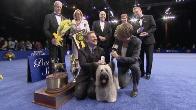 Meet Charlie, the Perfect Skye Terrier That Just Won Best in Show at the 2015 National Dog Show