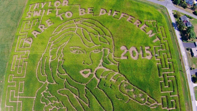 Maryland Corn Maze Features Taylor Swift's Face