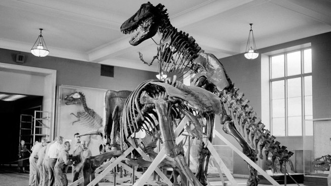 Dinosaurs Were Declining Long Before Asteroid Hit: Study