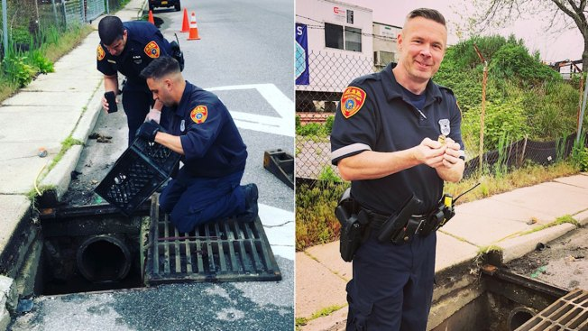 Officers Use App to Lure 14 Ducklings Back to Mom