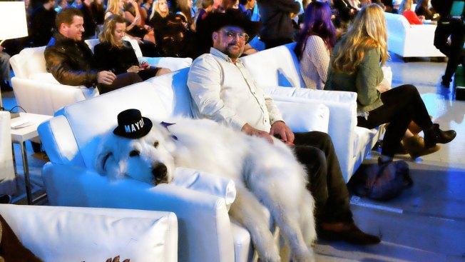 Duke the Dog Wins 3rd Term as Mayor of Minnesota Town