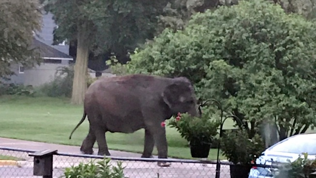 Great Escape: Owner of Elephants That Got Away Under Scrutiny