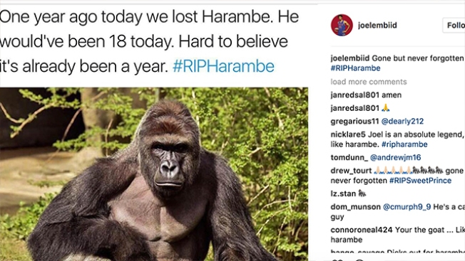Gone But Not Forgotten: Joel Embiid Remembers Harambe on 1-year Anniversary of Death