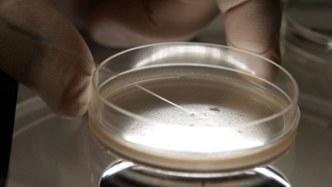 Scientists Repair Gene in Human Embryos for First Time