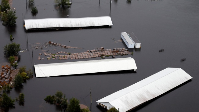 3.4 Million Poultry, 5,500 Hogs Drowned in Florence Flooding