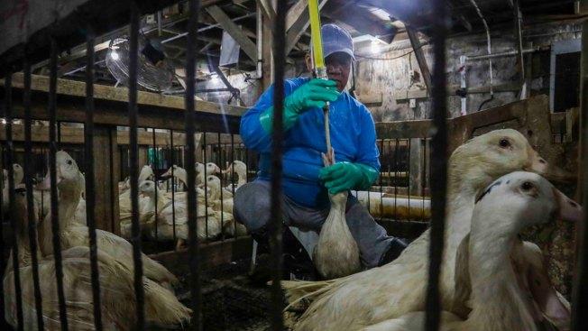 Farms Worry as New York City Considers Foie Gras Ban