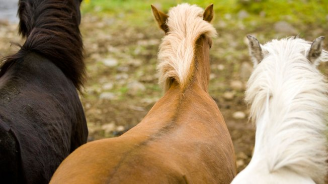 Hot Weather Causes Horse Poop in Upstate NY to Burst Into Flames
