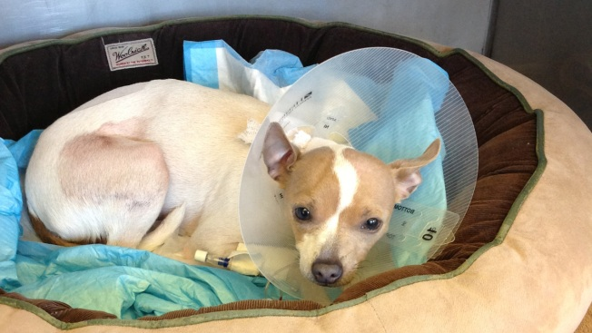 Dog Stabbed in Animal Cruelty Case