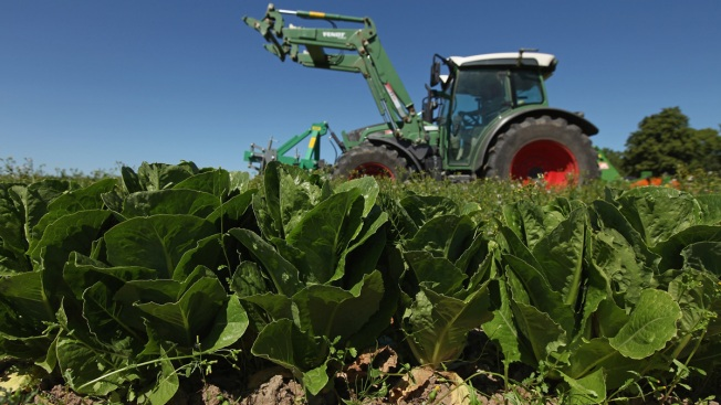 Emails Show FDA Worry With Growers After Romaine Outbreaks