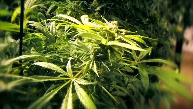 Bob Marley's Son Seeks NJ Marijuana Dispensary