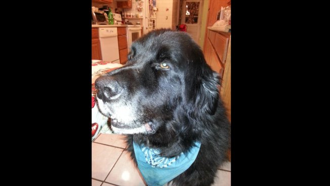 Dog Dies a Hero After Saving N.Y. Family from House Fire