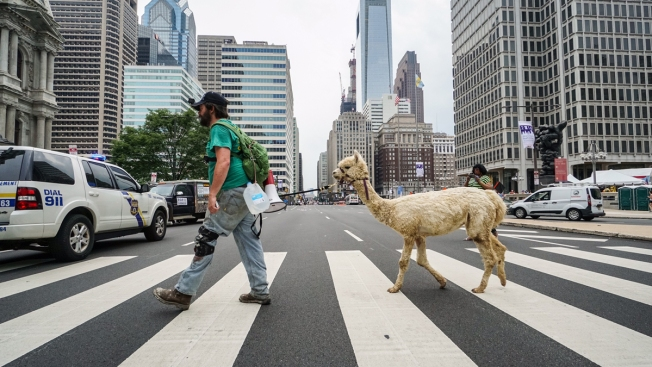 Llama or Alpaca? Philly Police Crack the Case