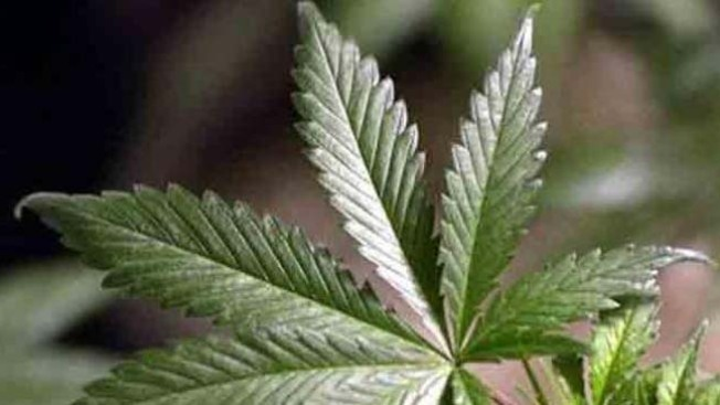 Mapping Pot Legalization Politics: Not Just Red vs. Blue