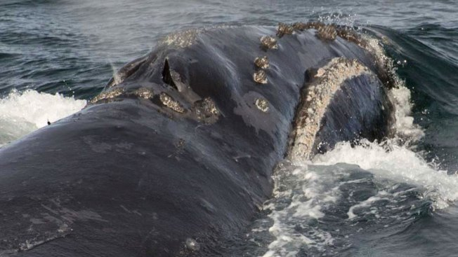 Scientists on Research Vessel Spot Rare Whale in Bering Sea