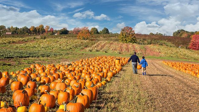 Pennsylvania, New Jersey, and Delaware Fall Attractions You Can't Miss