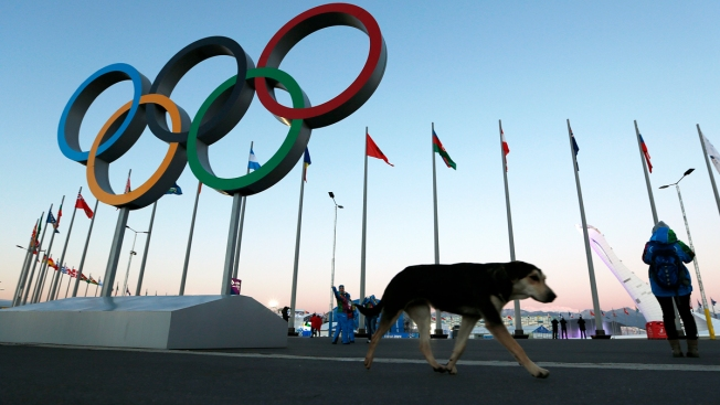 American Launches Quest to Bring Stray Dog Home From Sochi