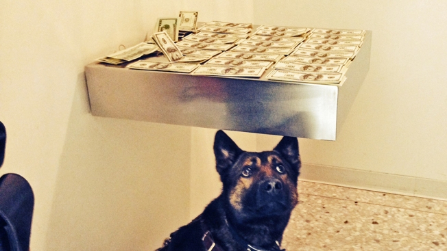Dog Alerts Customs to $16K in Undeclared Cash