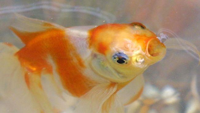 Counter Intelligence: Goldfish, Oprah & Rough Sex