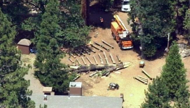 Death, Injuries After Tree Falls at Camp Tawonga Near Yosemite