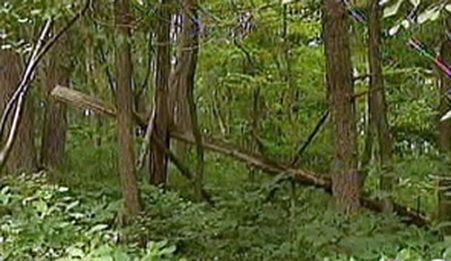 Man Falls From Tree, Lands in Hospital