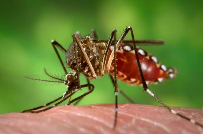 First Case of Mosquito-Borne Virus in Delaware