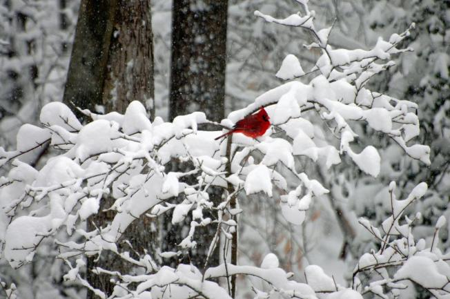 Snow Moves Out, Frigid Temps Move In