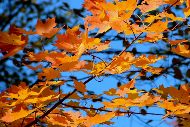A Quiet End to November: Sunny, Dry and 60s