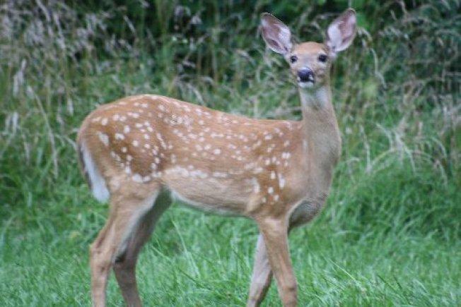 Probation for Hunter Who Bagged Deer at Walmart