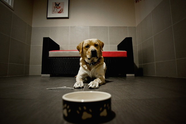 Pet-o-nomics: The Cost of Owning a Dog or Cat