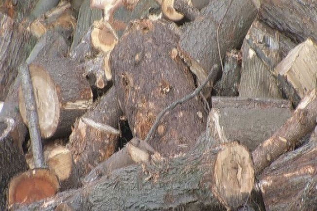 Man on Tractor Dies Collecting Firewood