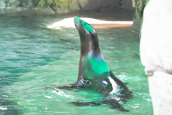 Visually Impaired Sea Lions From California Find New Home