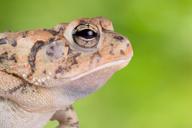 Real World Frogger Hits Roxborough