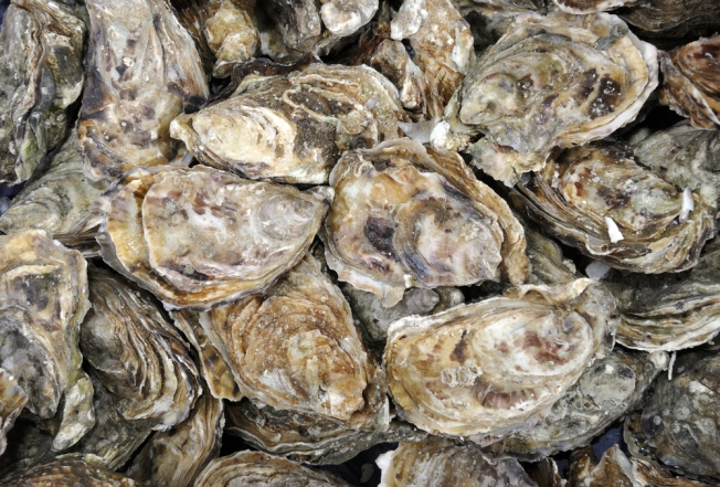Oysters Might be Future Protectors of NJ Shore