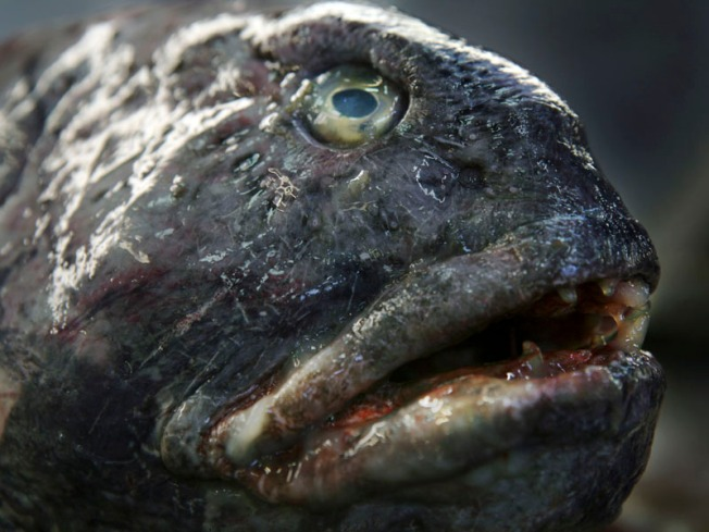 Save This Ugly Fish