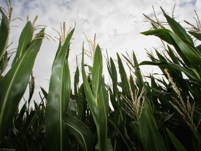 Constant Soaking Rains a Pain for NJ Farmers