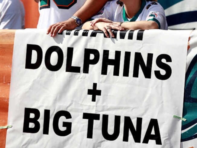 Dolphins' Turnaround Something to Behold
