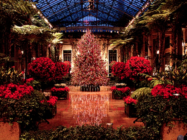 Longwood Gardens Lights Up the Holidays