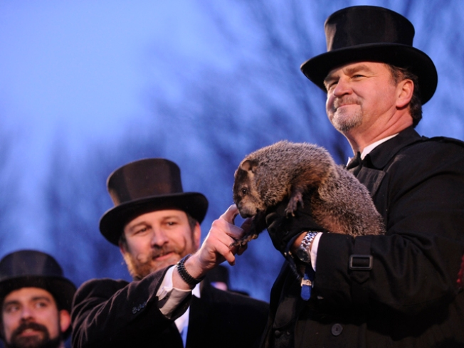 PETA Wants Robot Groundhog to Replace Phil