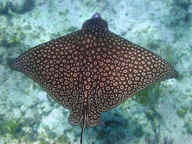 Adventure Aquarium Welcomes Stringrays