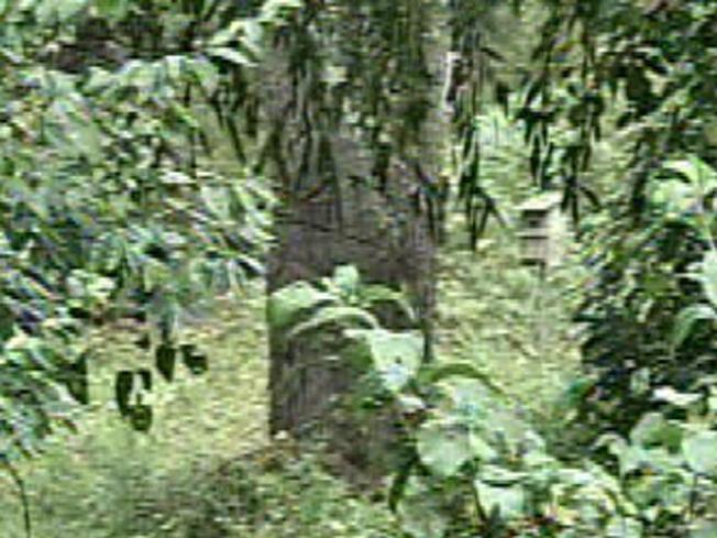Tree Splits, Kills Man